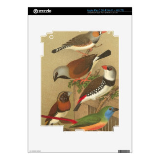 Five Colorful Pet Birds Perched on a Branch iPad 3 Skin
