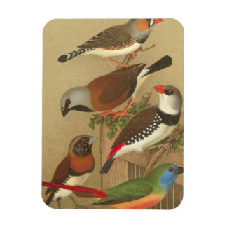 Five Colorful Pet Birds Perched on a Branch Magnet