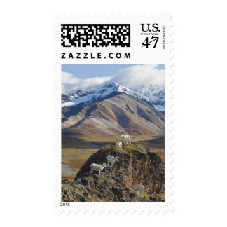 Five Dall sheep rams perch on a cliff Stamp