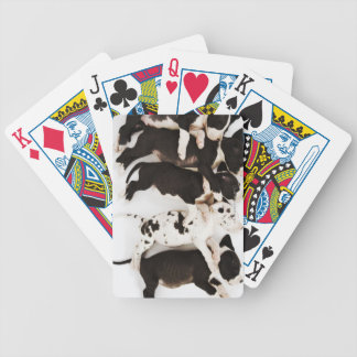 Five Harlequin Great Dane puppies sleeping Bicycle Playing Cards
