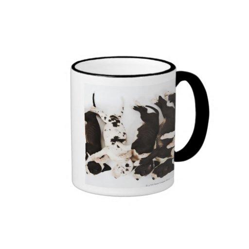 Five Harlequin Great Dane puppies sleeping in Mug