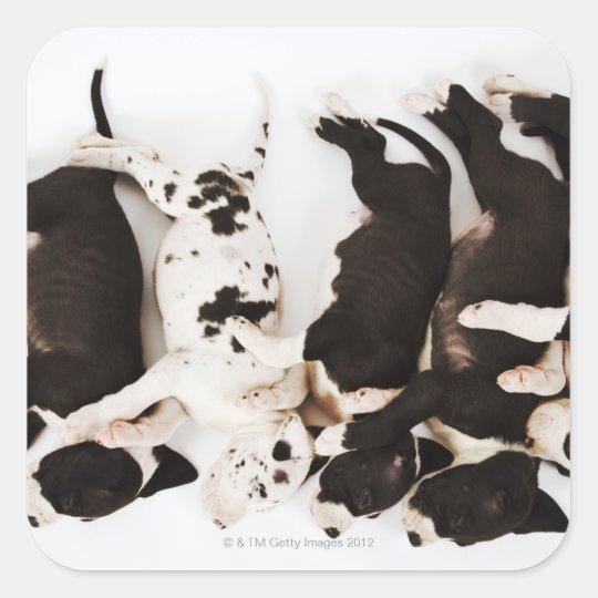 Five Harlequin Great Dane puppies sleeping in Square Sticker