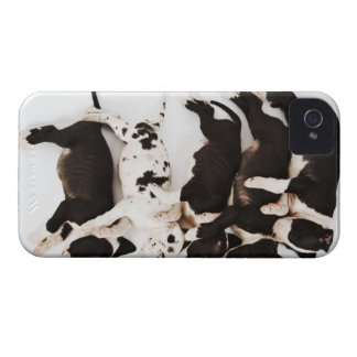 Five Harlequin Great Dane puppies sleeping iPhone 4 Case