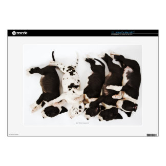 Five Harlequin Great Dane puppies sleeping Laptop Decal