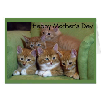 Five Kittens Mother's Day Greeting Card