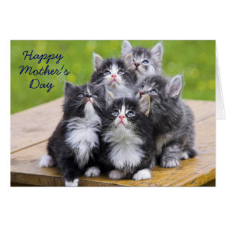 Five Kitties Mother's Day Card