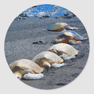 Five Lazy Turtles Lying In The Sand Classic Round Sticker