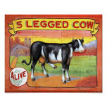 Five Legged Cow Poster
