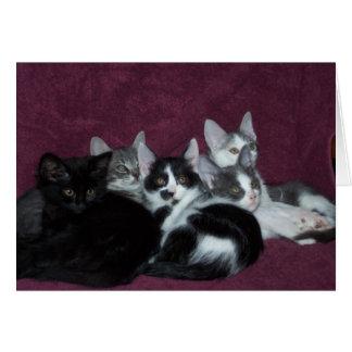 Five Little Kitties Card