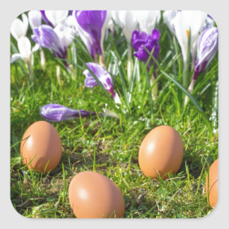 Five loose eggs lying near blooming crocuses square sticker