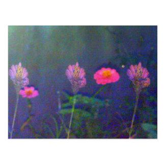Five Night Flowers Postcard