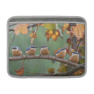 Five nuthatches sleeve for MacBook air