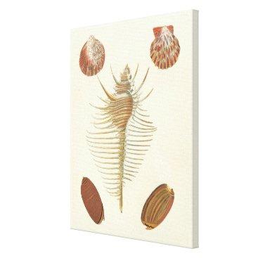 Beach Themed Five of a Kind Seashells Canvas Print