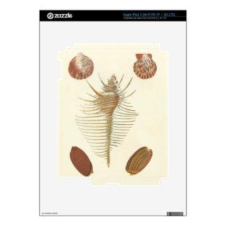 Five of a Kind Seashells Decal For iPad 3