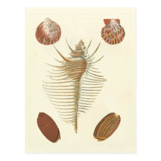 Five of a Kind Seashells Postcard
