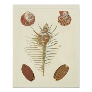 Beach Themed Five of a Kind Seashells Poster