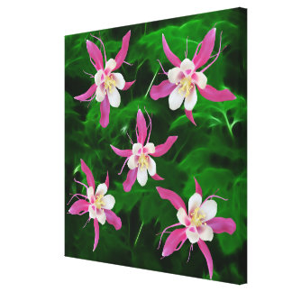 Five Pink Columbine flowers Stretched Canvas Prints