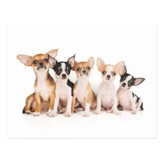 Five puppies postcard