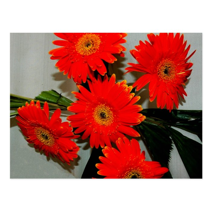 Five Red Flowers Postcard