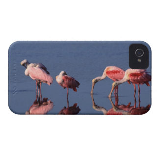 Five Roseate Spoonbills (Ajaia ajaja) feeding iPhone 4 Cover