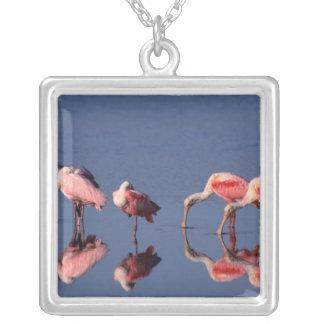 Five Roseate Spoonbills (Ajaia ajaja) feeding Square Pendant Necklace