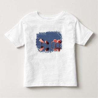 Five Roseate Spoonbills (Ajaia ajaja) feeding Toddler T-shirt