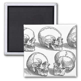 Five Skulls Magnet