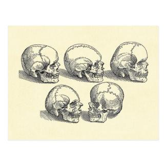 Five Skulls Postcard