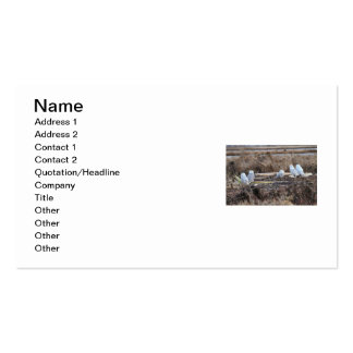 Five Snowy Owls Picture Business Card Templates