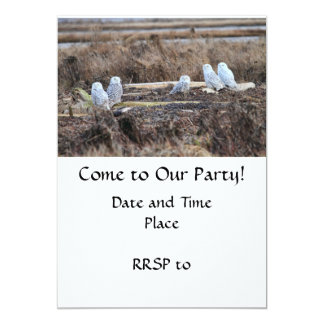 Five Snowy Owls Picture Card