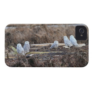 Five Snowy Owls Picture iPhone 4 Case-Mate Case