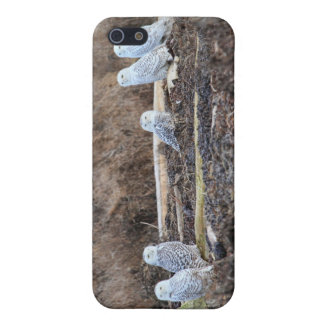 Five Snowy Owls Picture Case For iPhone 5