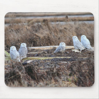 Five Snowy Owls Picture Mousepads
