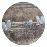 Five Snowy Owls Picture Plates