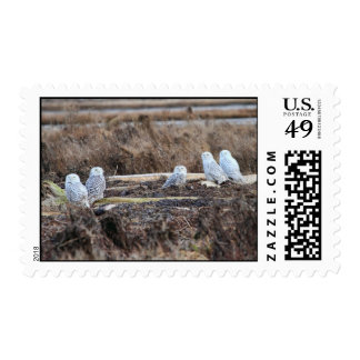 Five Snowy Owls Picture Postage Stamps
