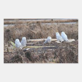 Five Snowy Owls Picture Rectangular Sticker