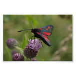 Five-spot Burnet Moth Art Photo