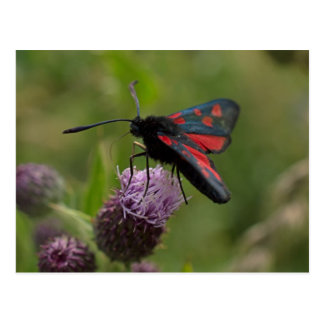 Five-spot Burnet Moth Postcard
