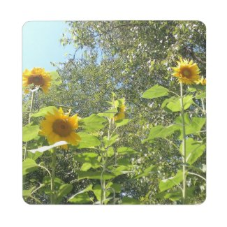 Five Suns Puzzle Coaster
