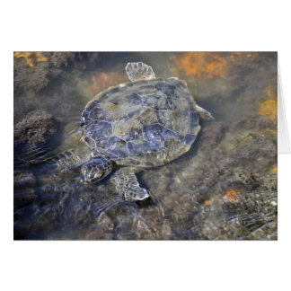 FL Sea Turtle Stationery Note Card