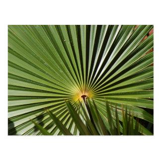 Fla. Planta tropical Postal
