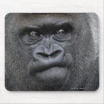 Flachlandgorilla, gorila alfombrilla de ratones