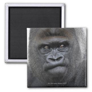 Flachlandgorilla, gorila del gorila, imán cuadrado