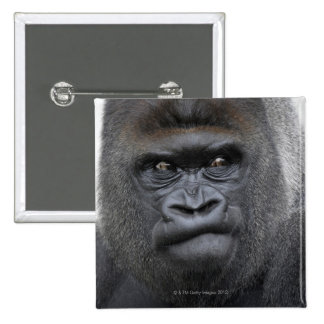 Flachlandgorilla, gorila del gorila, pin cuadrado