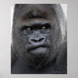 Flachlandgorilla, gorila del gorila, póster