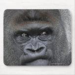 Flachlandgorilla, gorila del gorila, alfombrillas de raton
