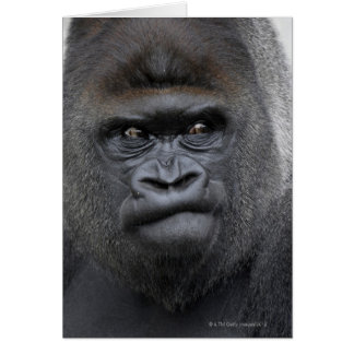 Flachlandgorilla, gorila del gorila, tarjeton