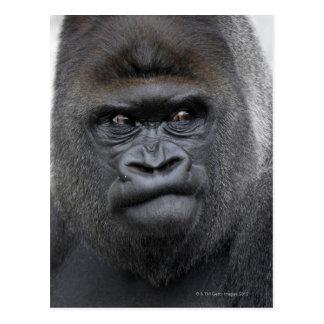 Flachlandgorilla, gorila del gorila, tarjeta postal