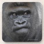Flachlandgorilla, Gorilla Drink Coaster