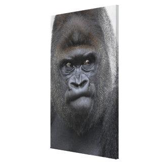Flachlandgorilla, Gorilla gorilla, Canvas Print
